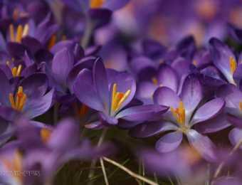Naturfotografie im Frühling