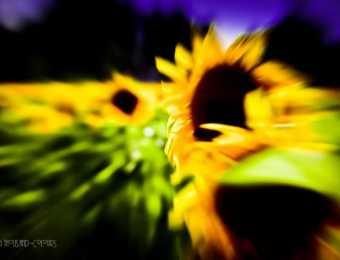 Naturfotografie im Sommer